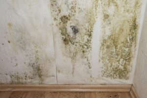 Mold Inspection Charlotte